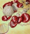 Microscopía electrónica de barrido de moléculas de ADN y glóbulos rojos y blancos . - foto de stock