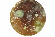 Vista superior dos micróbios crescendo na placa de ágar em fundo liso. — Fotografia de Stock