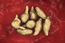 Mycoplasma genitalium batteri parassiti, illustrazione digitale . — Foto stock