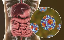 Digital illustration of liver and close-up of hepatitis A virus particles. — Stock Photo