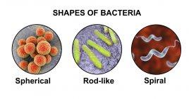 Illustration de différentes formes de bactéries : sphérique, en forme de tige et en spirale . — Photo de stock