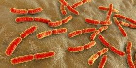 Bacterias Lactobacillus coloreadas del microbioma humano del intestino delgado, ilustración . - foto de stock