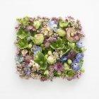 Весенние цветы в квадратной форме, студия съемки . — стоковое фото