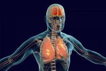 Cervello e polmoni nella silhouette umana, illustrazione digitale . — Foto stock