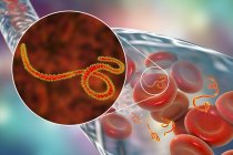 Ebola virus in blood and close-up of virions, digital illustration. — Stock Photo