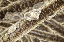 Ilustración digital del cabello humano con caspa . - foto de stock