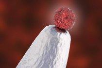 Célula madre embrionaria humana en punta de alfiler, obra de arte digital conceptual . - foto de stock