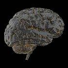 Человеческий мозг с соединения и точки, Иллюстрация. — стоковое фото