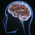 Silueta humana con cerebro, ilustración digital . - foto de stock