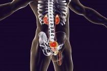 Ilustração digital da silhueta masculina com sistema urinário, incluindo glândula adrenal, rins, bexiga urinária, ureter, próstata e uretra . — Fotografia de Stock