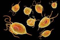 Trichomonas vaginalis microorganismos parásitos causantes de tricomoniasis, ilustración digital . - foto de stock