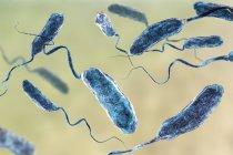 Grupo de bacterias flagella cólera, ilustración digital . - foto de stock