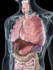 Ilustración de la anatomía del tórax en silueta masculina transparente . - foto de stock
