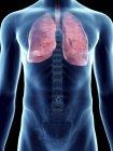 Ilustración de pulmones en silueta masculina transparente . - foto de stock