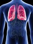 Ilustración de pulmones en silueta corporal masculina . - foto de stock