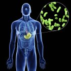 Illustration of stomach and close-up of green bacteria of infection in male body silhouette on black background. — Stock Photo