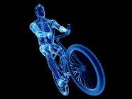 3D рендеринг иллюстрация скелета в силуэте мужского велосипедиста на черном фоне . — стоковое фото