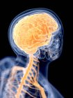 3d ilustración renderizada del cerebro humano . - foto de stock