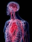 3d ilustración representada del sistema vascular humano . — Stock Photo