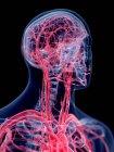 3d hecho ilustración del sistema vascular de la cabeza humana . - foto de stock
