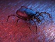 3d renderizado ilustración de color de garrapata en la superficie de la piel . - foto de stock