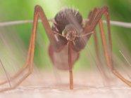 Digital illustration of mosquito sucking blood on skin. — Stock Photo