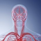 Ilustración médica de vasos sanguíneos humanos de la cabeza . - foto de stock