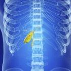 Illustrazione della cistifellea umana sana nella sagoma del corpo. — Foto stock