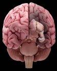 Ilustración de la anatomía realista del cerebro humano sobre fondo liso . - foto de stock
