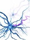 Ilustración digital de células nerviosas humanas con dendritas . - foto de stock