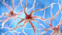 Illustration of healthy human nervous cell. — Stock Photo