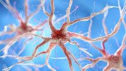 Ilustración de células nerviosas humanas sanas . - foto de stock