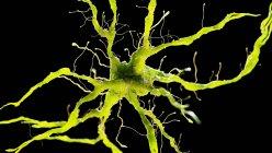 Цветная иллюстрация нервных клеток на черном фоне . — стоковое фото
