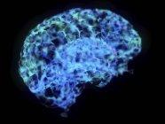 Illustrazione del cervello astratto del plesso su sfondo nero . — Foto stock