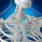 Ilustración de clavícula en esqueleto humano sobre fondo azul . - foto de stock