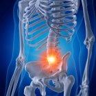 Ilustración de la columna lumbar dolorosa en el esqueleto humano sobre fondo azul . - foto de stock