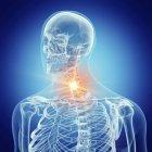 Ilustración de la columna cervical en el esqueleto humano sobre fondo azul . - foto de stock