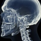 Ilustración de la articulación temporomandibular en esqueleto humano . - foto de stock