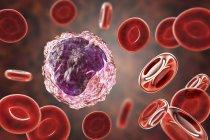 Glóbulos blancos monocitos en frotis de sangre, ilustración digital . - foto de stock