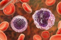 Monocitos y linfocitos glóbulos blancos en frotis de sangre, ilustración digital . - foto de stock