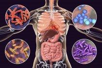 Digitale Illustration mit Bakterien, die Infektionen der Atemwege, des Herzens und des Verdauungstraktes, Mykobakterium tuberculosis, Enterokokken faecalis, Salmonellen, Shigellen verursachen. — Stockfoto