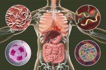 Ilustración digital que muestra bacterias causantes de infecciones del aparato respiratorio y digestivo, Mycobacterium tuberculosis, Helicobacter pylori, Hepatitis A, Rotavirus . - foto de stock