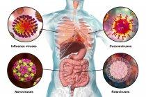 Humane pathogene Viren, die Atemwegs- und Darminfektionen verursachen, digitale Illustration. — Stockfoto