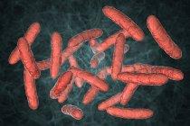 Probiotic bacteria in normal intestinal microbiota, digital illustration. — Stock Photo
