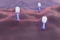 Цифровая иллюстрация вирусов бактериофагов, заражающих бактерии . — стоковое фото