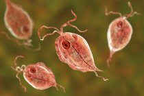 Grupo de parásitos protozoarios Trichomonas hominis, ilustración digital . - foto de stock