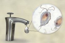 Conceptual digital illustration showing Pentatrichomonas hominis parasites in drop of water from dirty tap. — Stock Photo