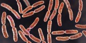 Bacterias del lactobacilo en el microbioma del intestino delgado humano, ilustración digital . - foto de stock