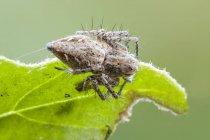 Araignée de lynx se reposant au bord de la feuille verte. — Photo de stock
