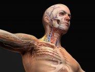 Diagrama de anatomía de cabeza y pecho masculino con efecto fantasma sobre fondo negro . - foto de stock